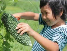暑い夏が到来!元気に過ごすための野菜の食べ方