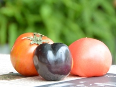 食材の不思議!野菜にはその時々必要な栄養が詰まってる。